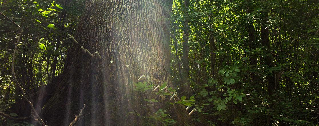 Traitement de l'agrile du frêne