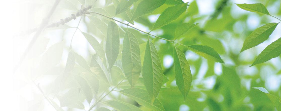 Protégez vos frênes dès maintenant